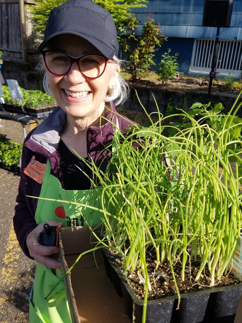 Gloria setting out plants