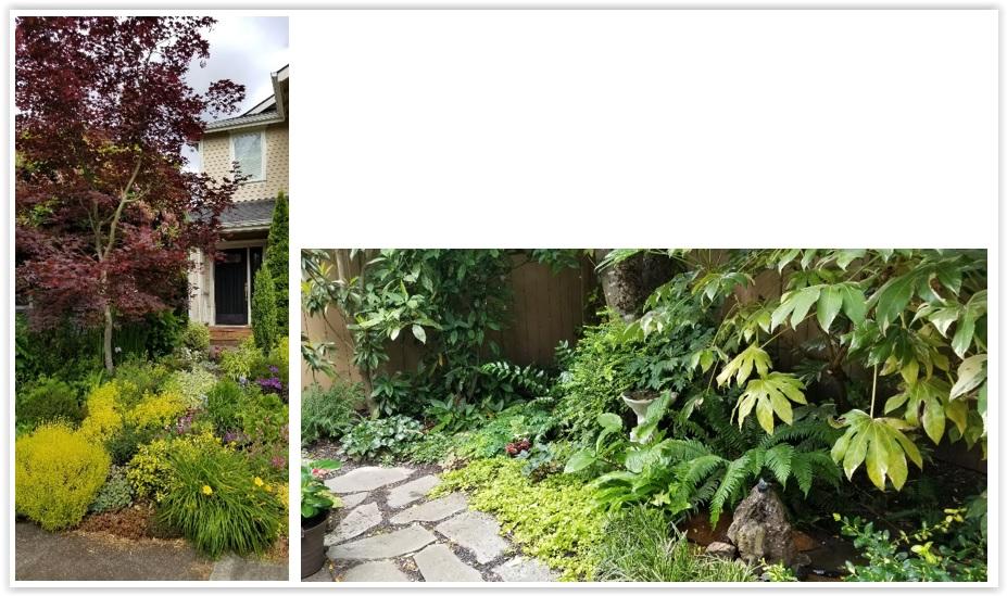Evies Garden.jpg