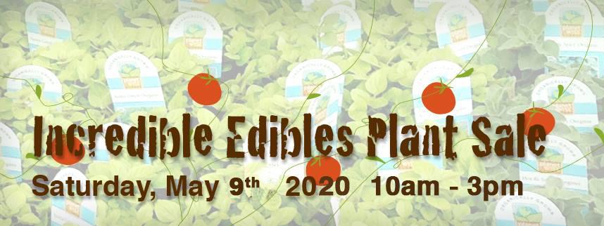 IE banner 2020.jpg