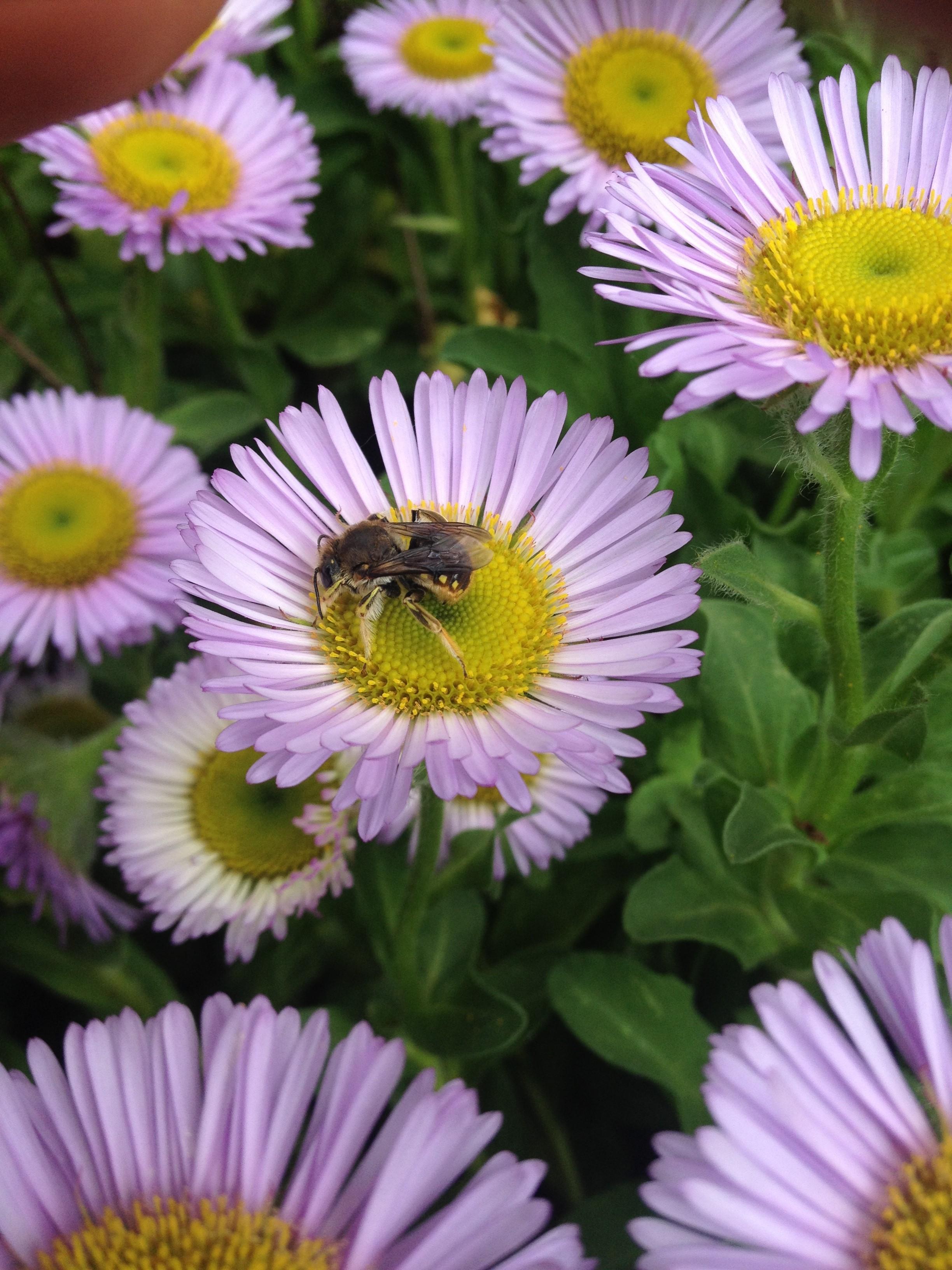 Pollinators courtesy of Mace Vaughn  (002) (1).jpg