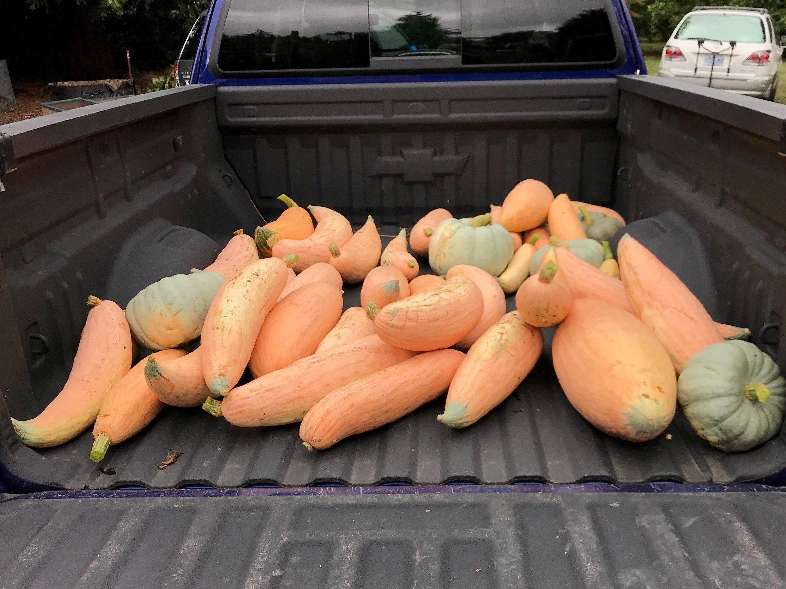 Demo Garden Harvest from 8/29/2019