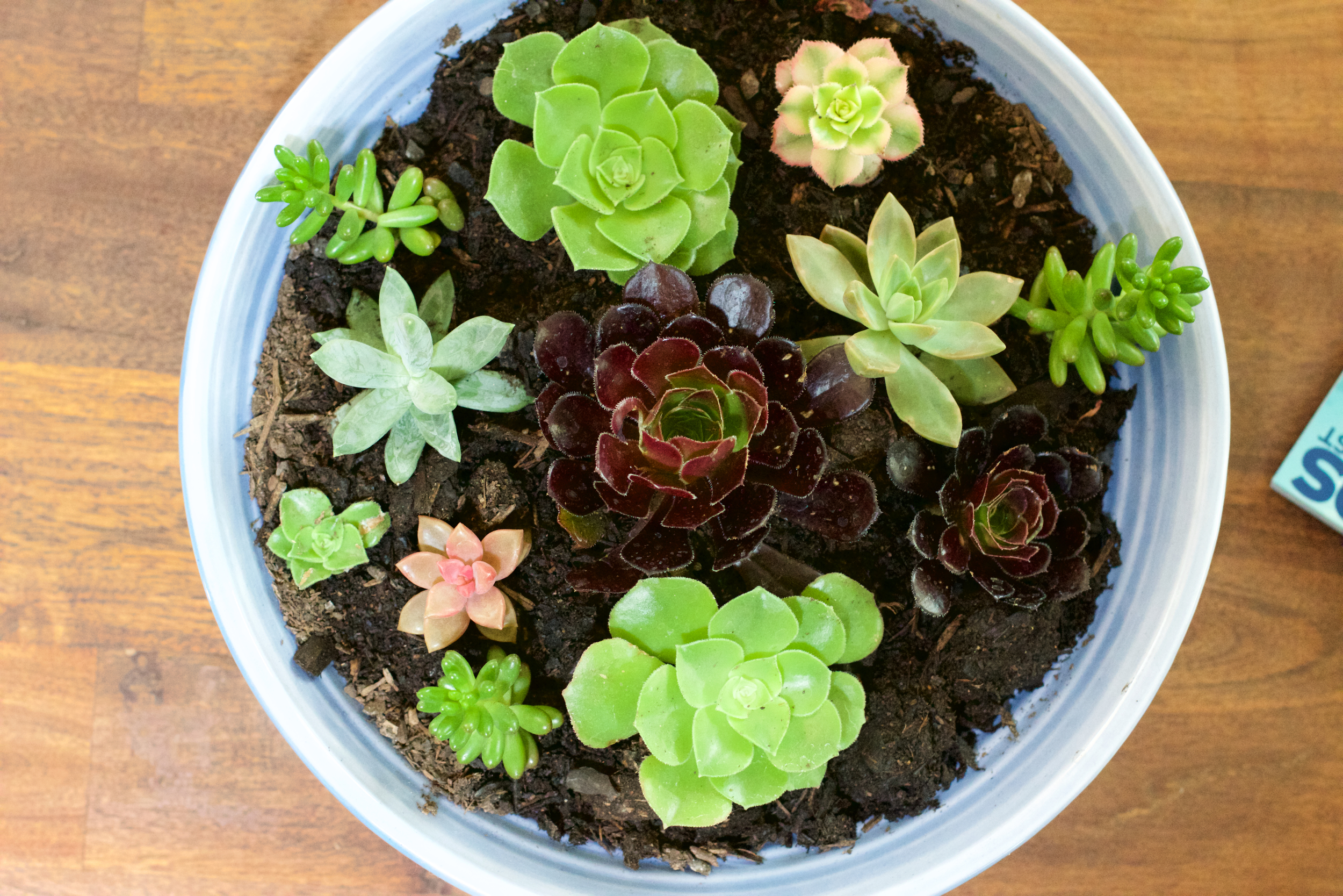 Succulents are need little to no attention, but add a touch of life to any space.