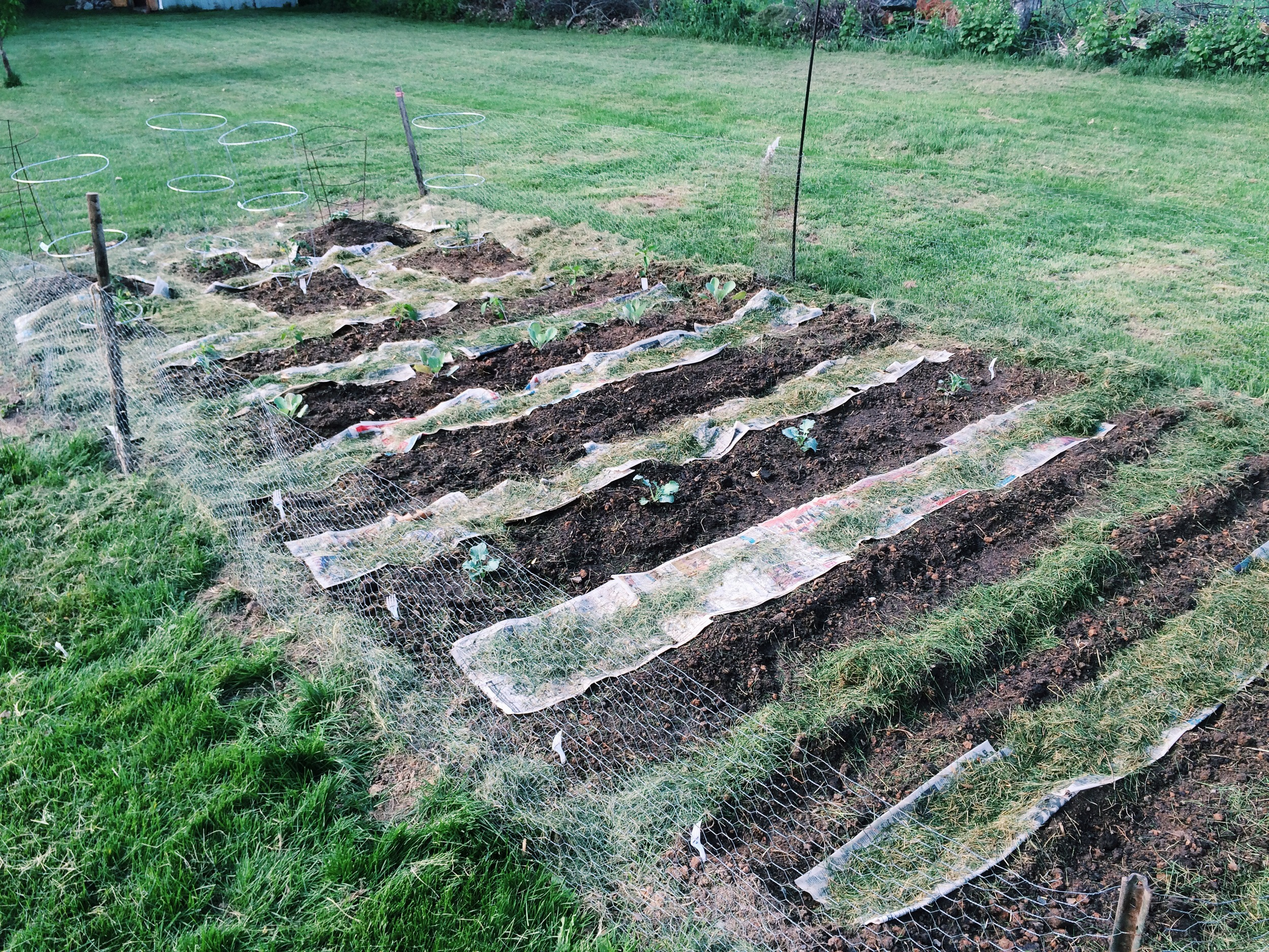 **WARNING**   I am not a gardening pro and this is my FIRST GARDEN.  This is trial by fire.  I'll write about my experiences, successes and failures, but I make no claims that I have any idea what the hell I'm doing!  Let's do this!