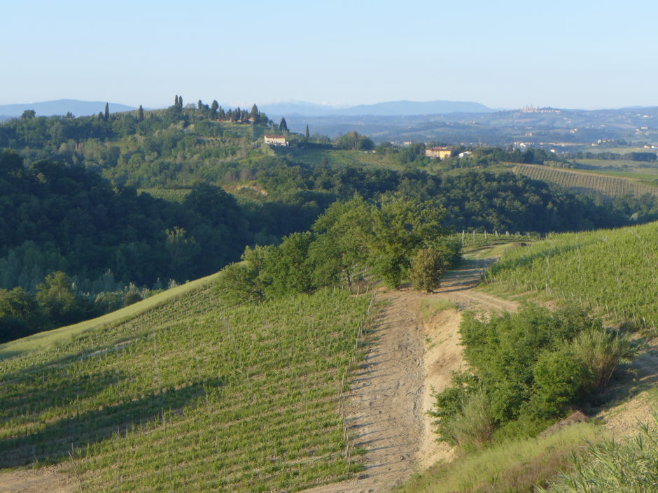 lameridiana landscape.jpg
