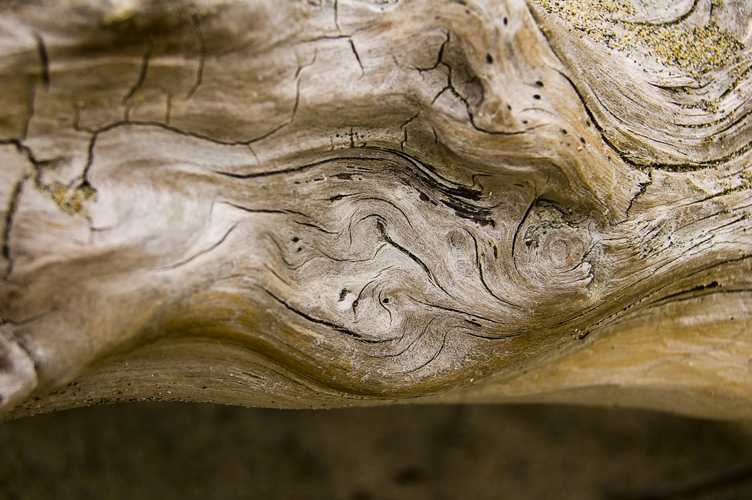 One of the biggest sources of inspiration for my own home is simply driftwood. I love the organic curve, the variety of texture and color, the way it symbolizes the fresh salty ocean air.