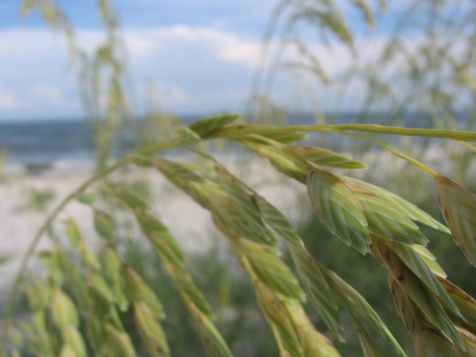Fields of tall grass