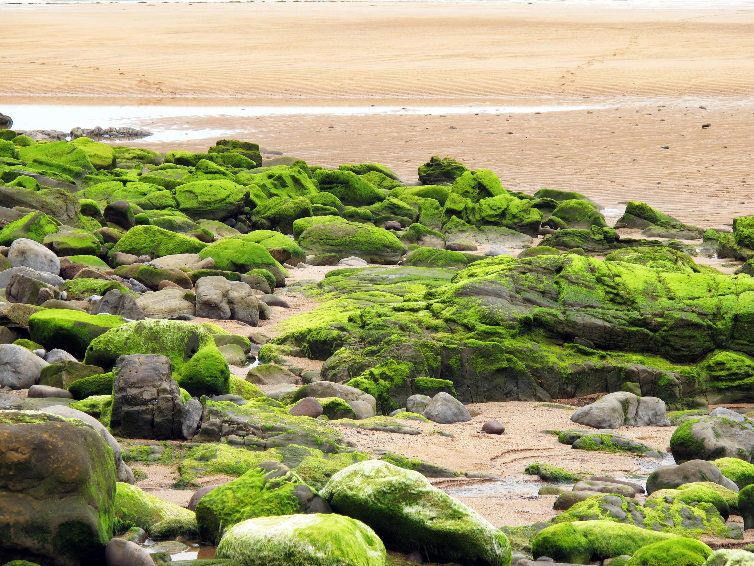 The glow of algae