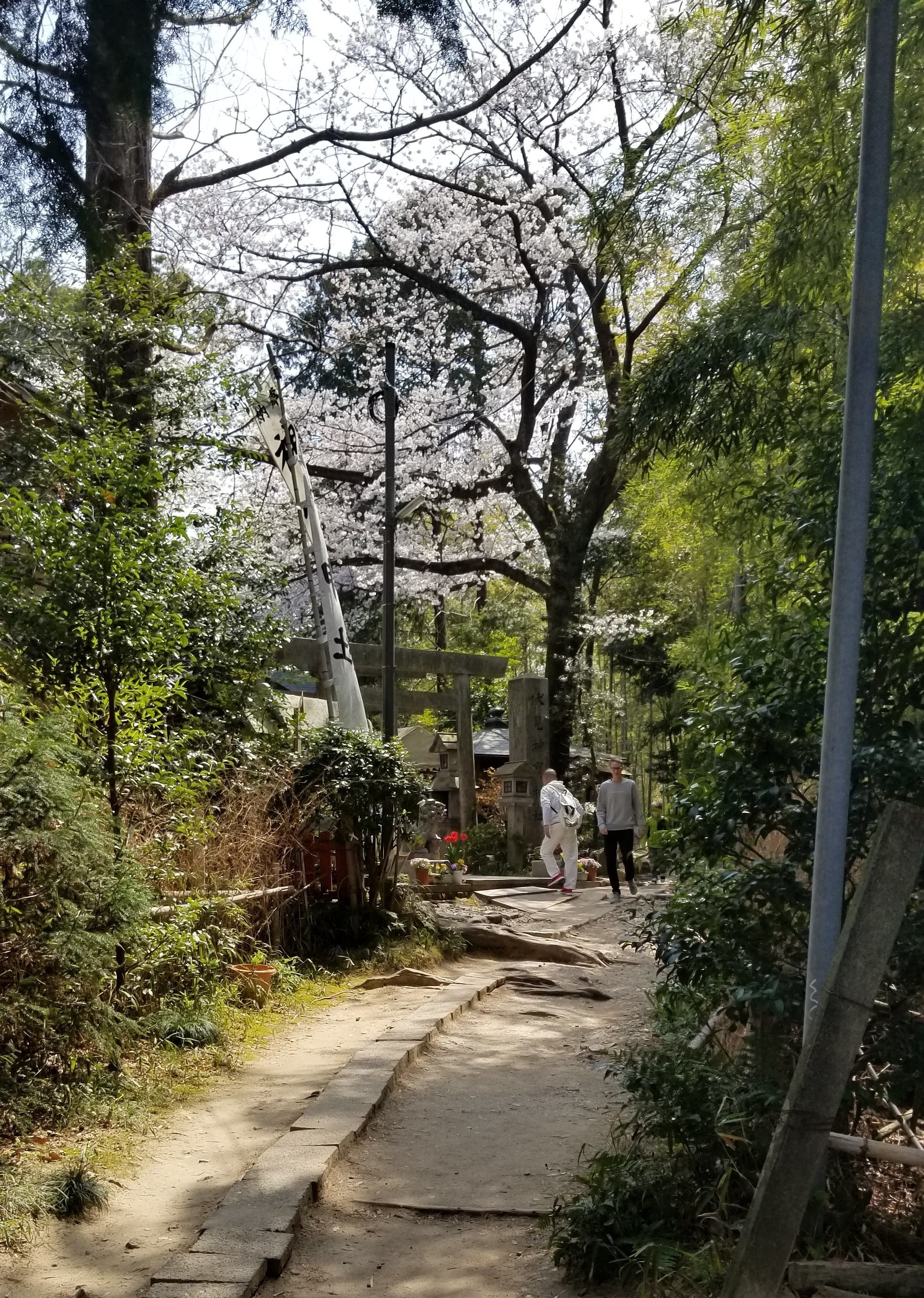 It was hard to tell whether nature sprouted up around the shrine, or whether the shrine was developed within these amazing natural surroundings. It felt as though they grew together.