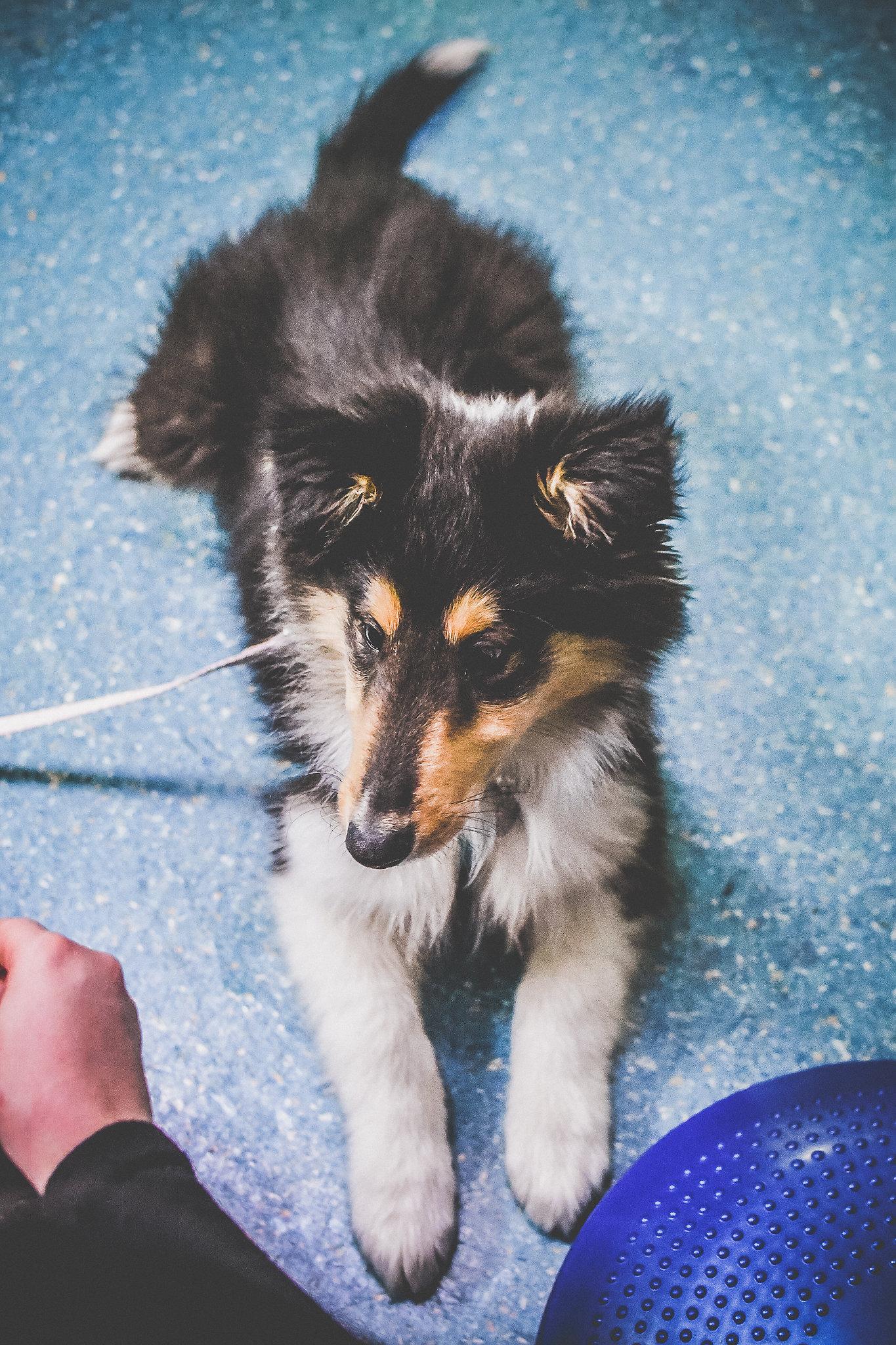 puppy-063.jpg