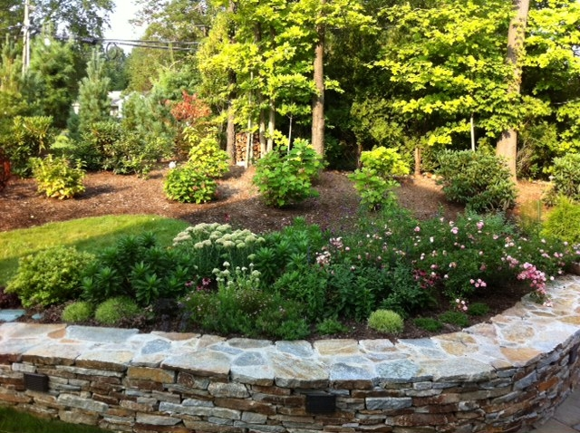 Planting above stacked stone wall.JPG