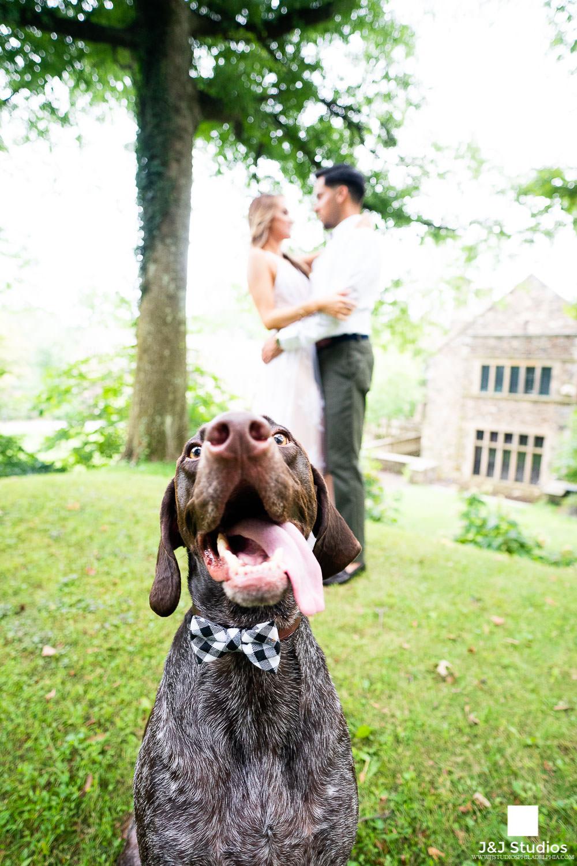 dog-engagement-ideas-philadelphia