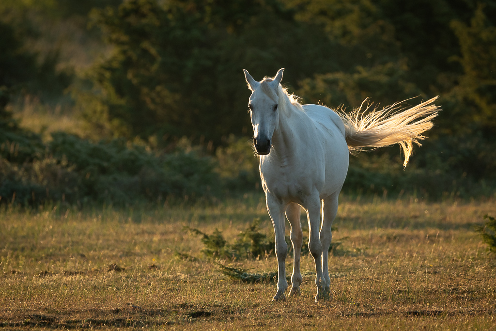 Horse in morning light