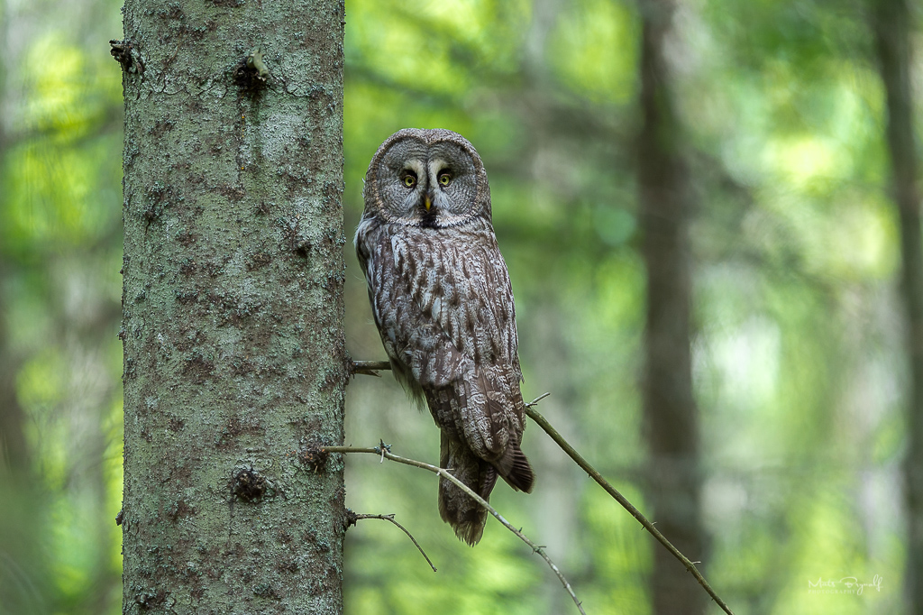 Of all the different owls, this is my favourite owl.