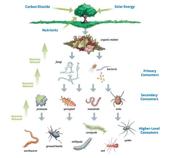 soil_foodweb.jpg