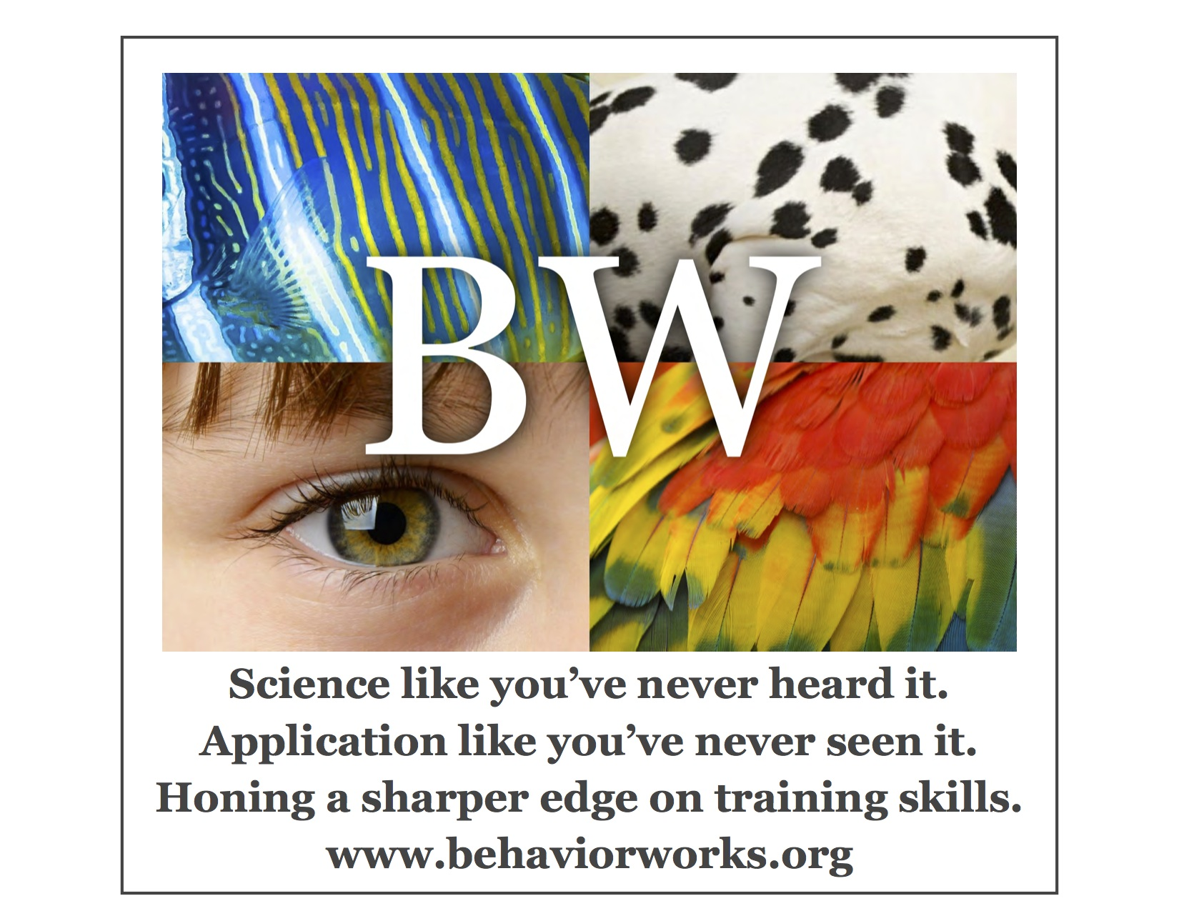www.behaviorworks.org