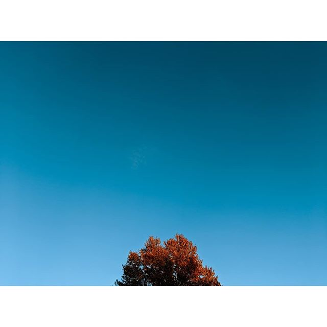 #dailyphoto #fall #color #daily_captures