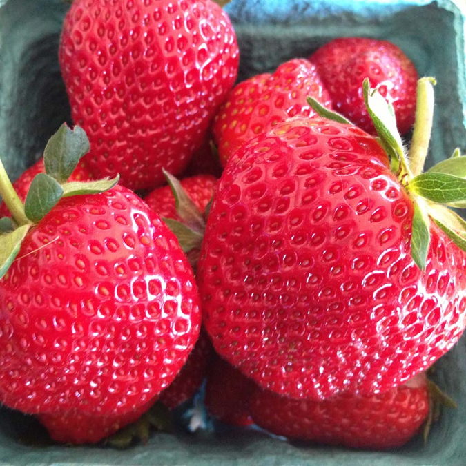 pell farms strawberry1 sq.png