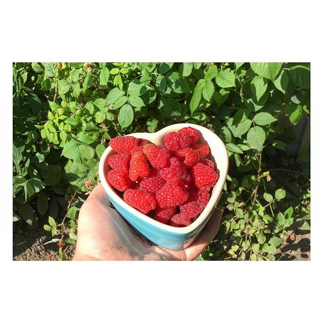 Bye-bye rhubarb, hello raspberries! 😍 #loveyourgarden #growyourown