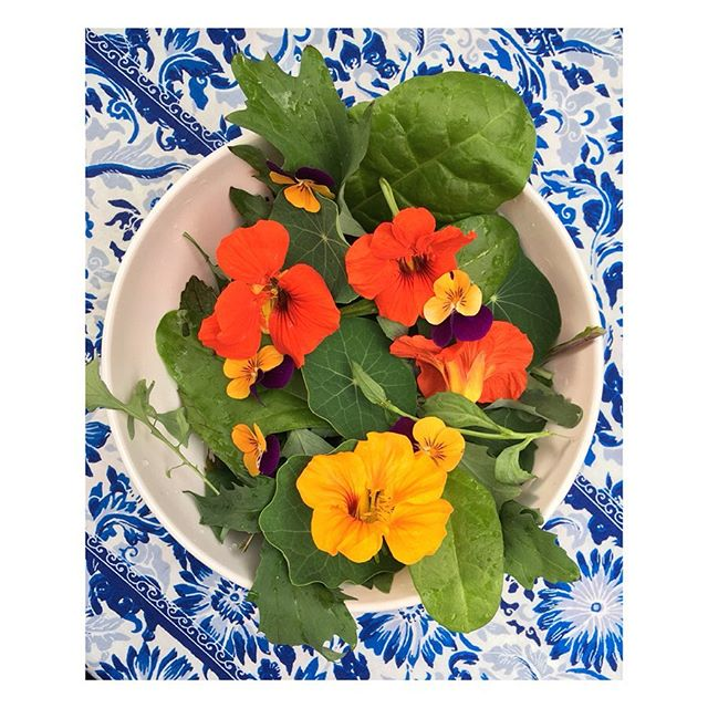 So satisfying to have a completely home grown salad last night; a mixture of salad leaves, chard, nasturtium leaves and flowers (with a few violas in there too!). It blended in very well with the pattern on my plate! It's certainly making me want to do some food illustration; maybe I need to finally experiment with some gouache! #growyourown #prettyfood