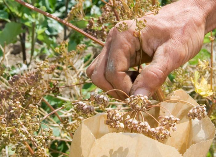 faire-ses-graines-potager-l720-h512.jpg