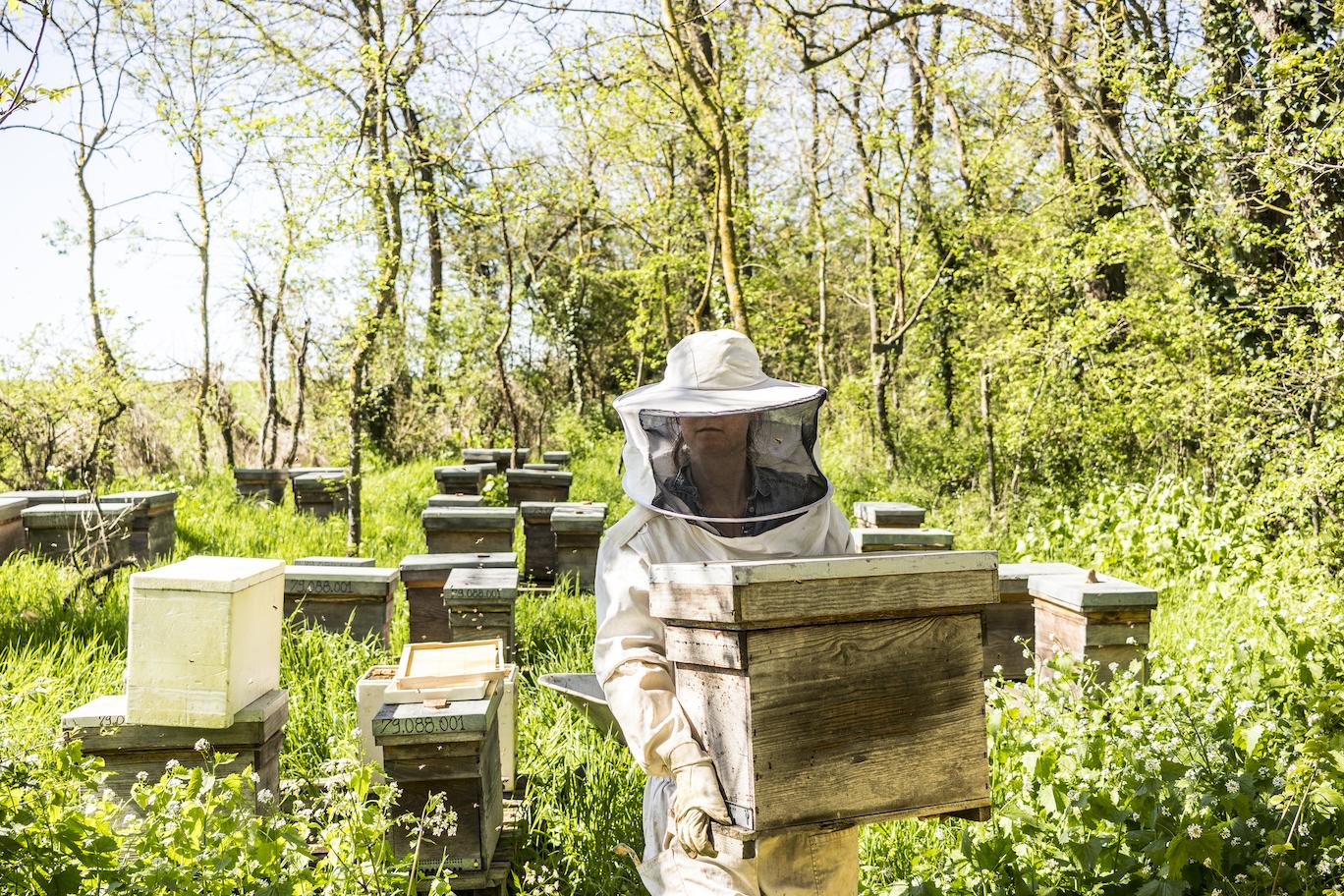 Le rucher Creusois-20.jpg