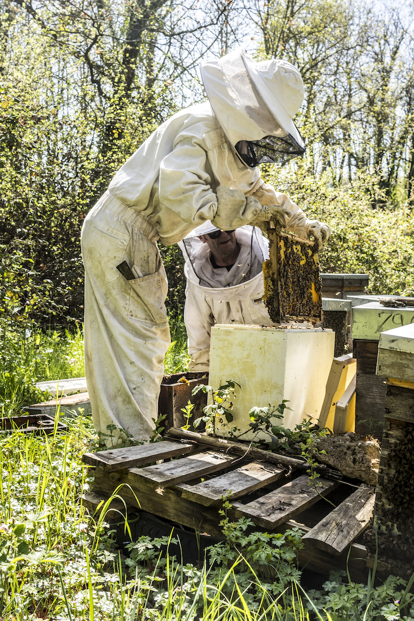 Le rucher Creusois-24.jpg