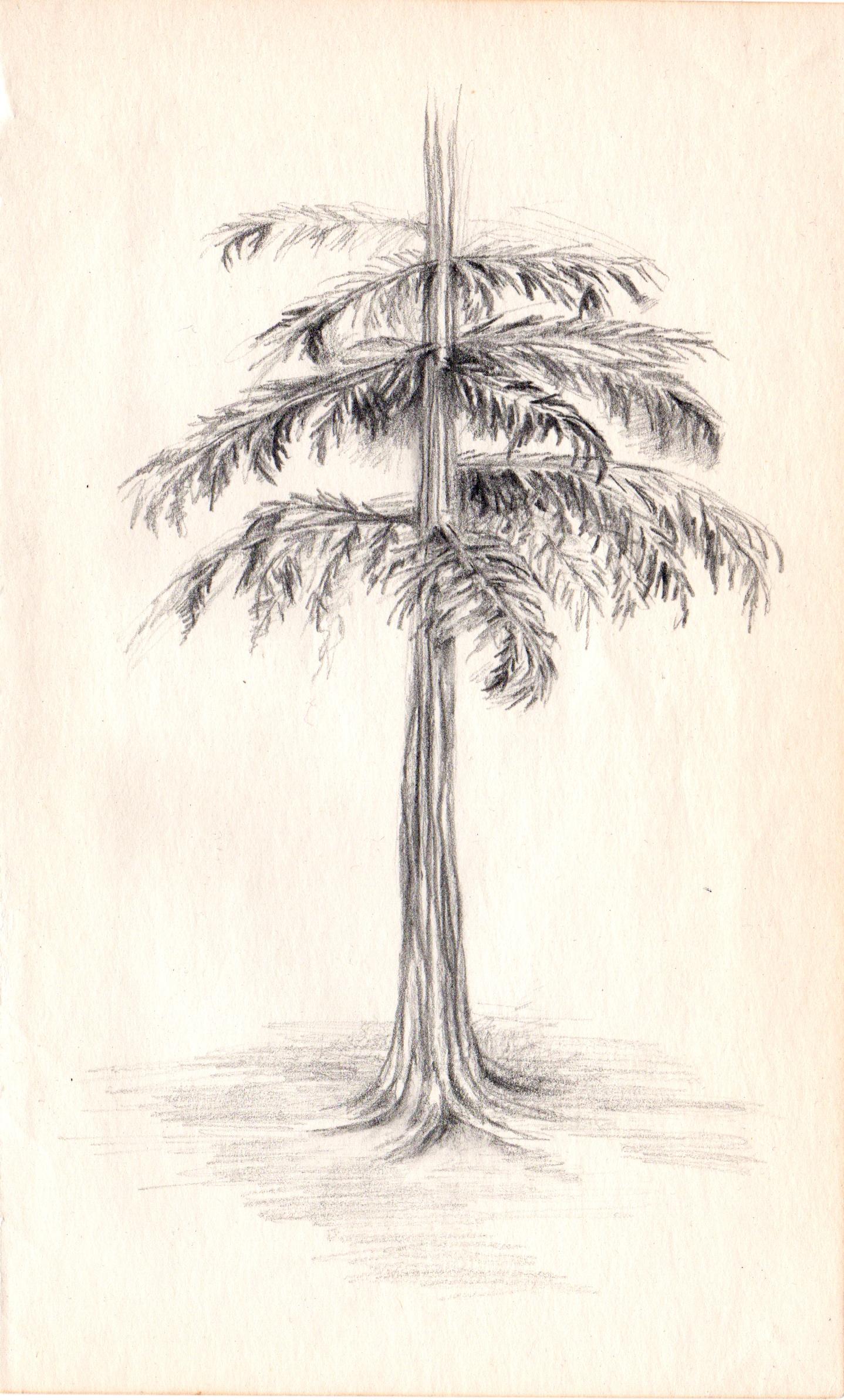 Scan008 edit tree.jpg