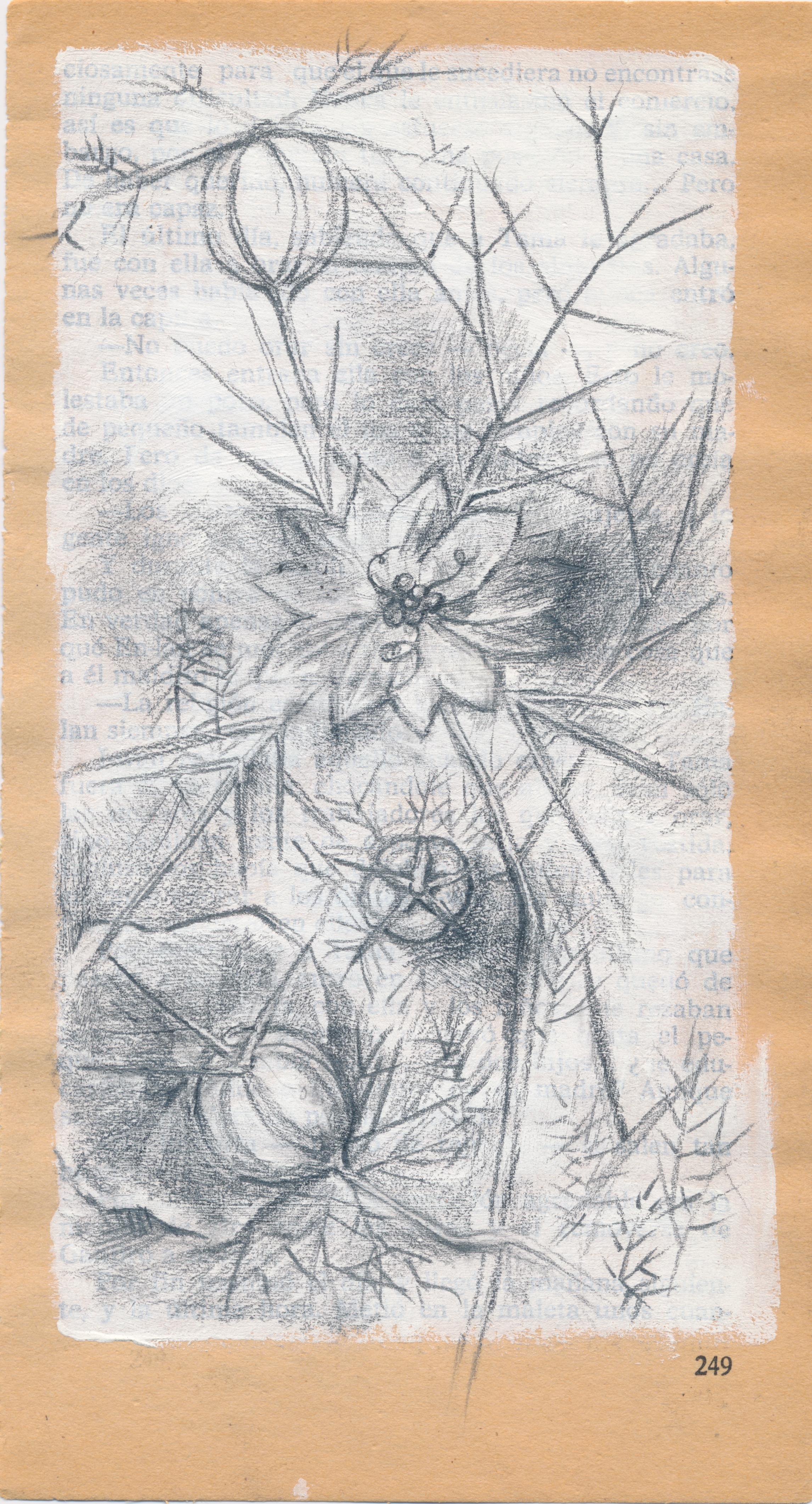 Wildflowers_Scan.jpeg