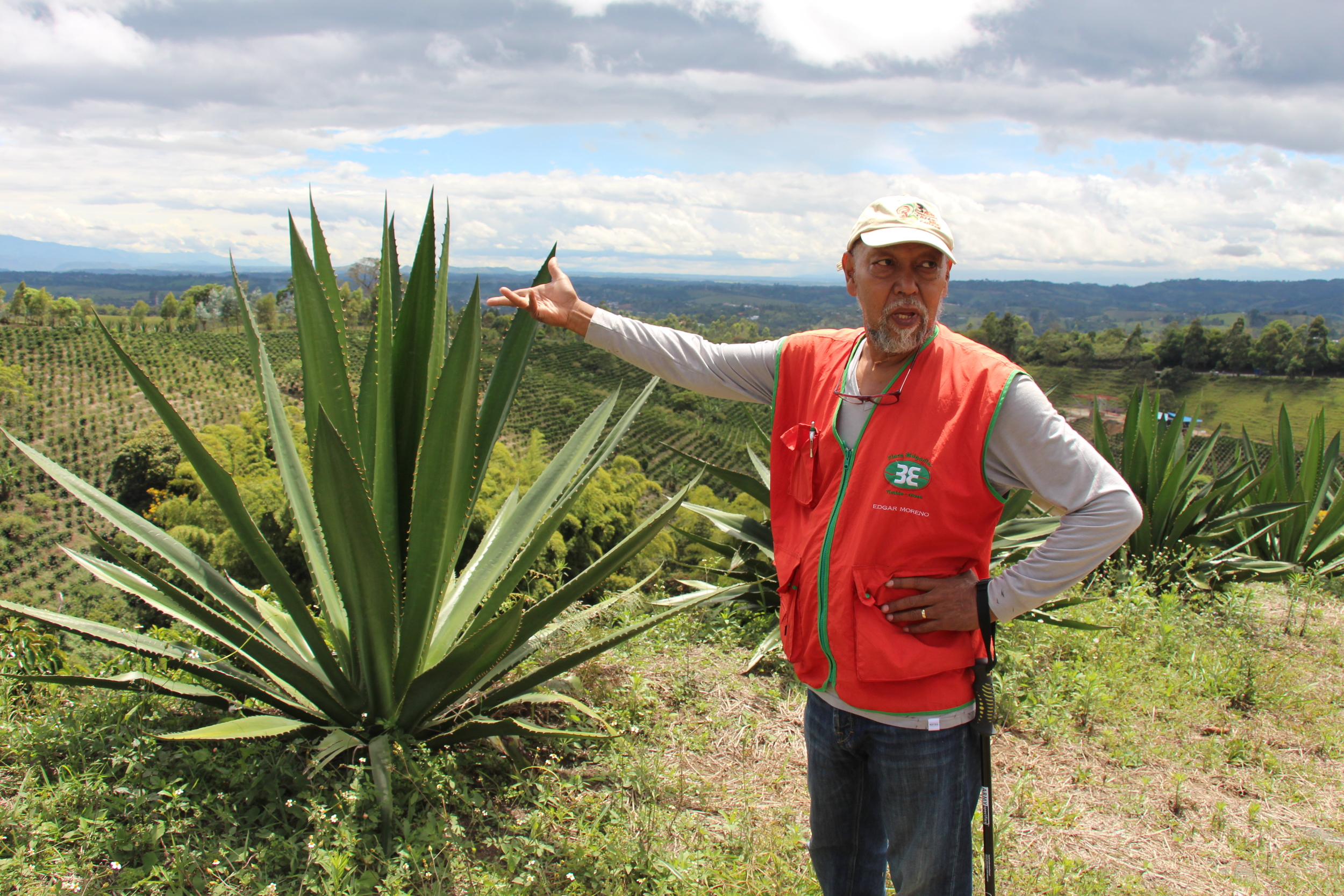 Edgar pointing at a 'fique' plant, commonly used to make coffee bags