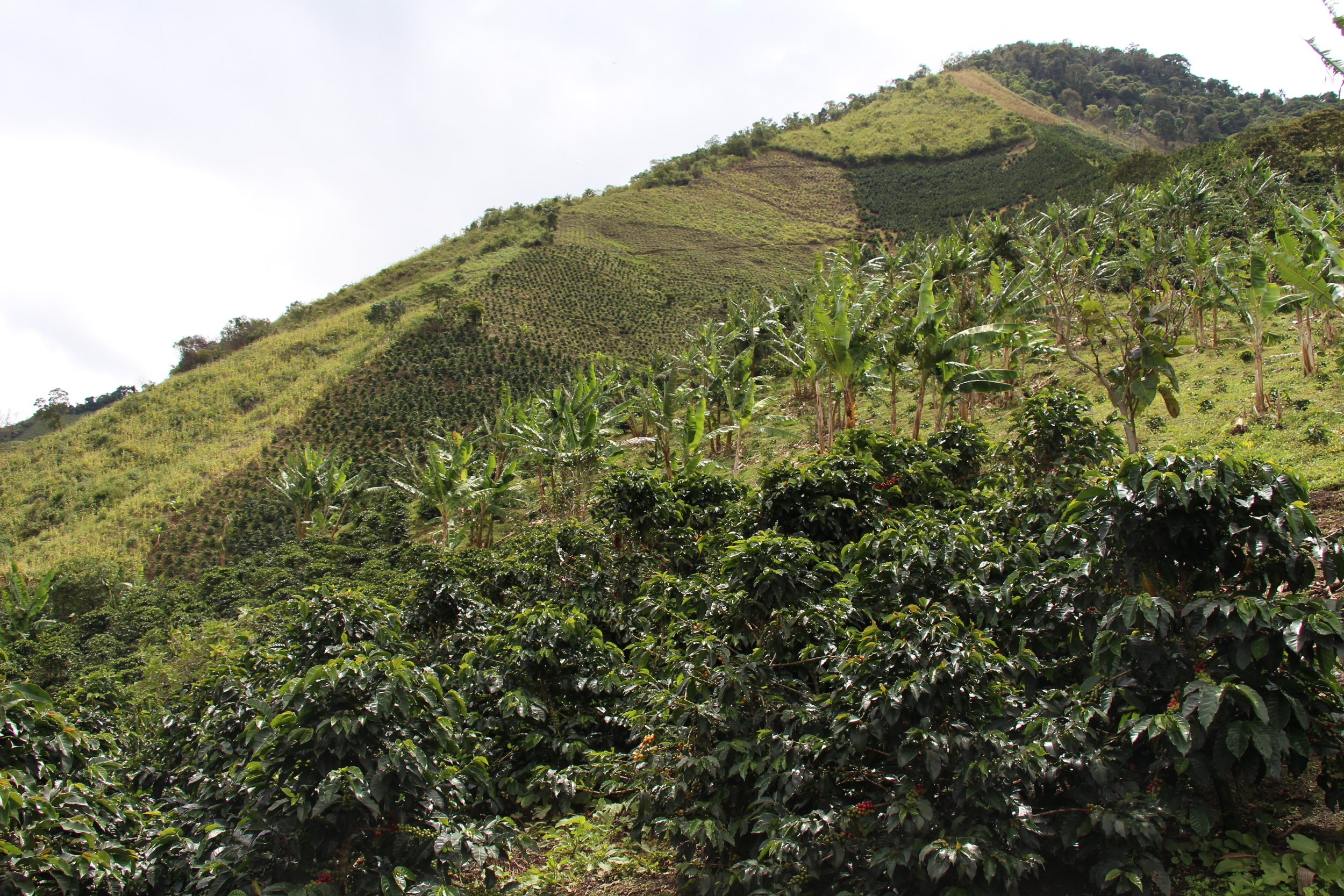 Steep Colombian slopes