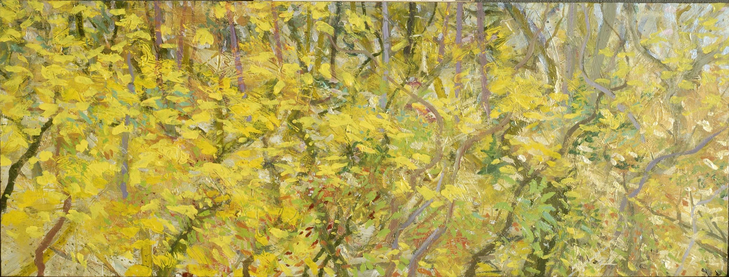 Fall Woodland