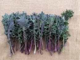 Red Russian Kale-