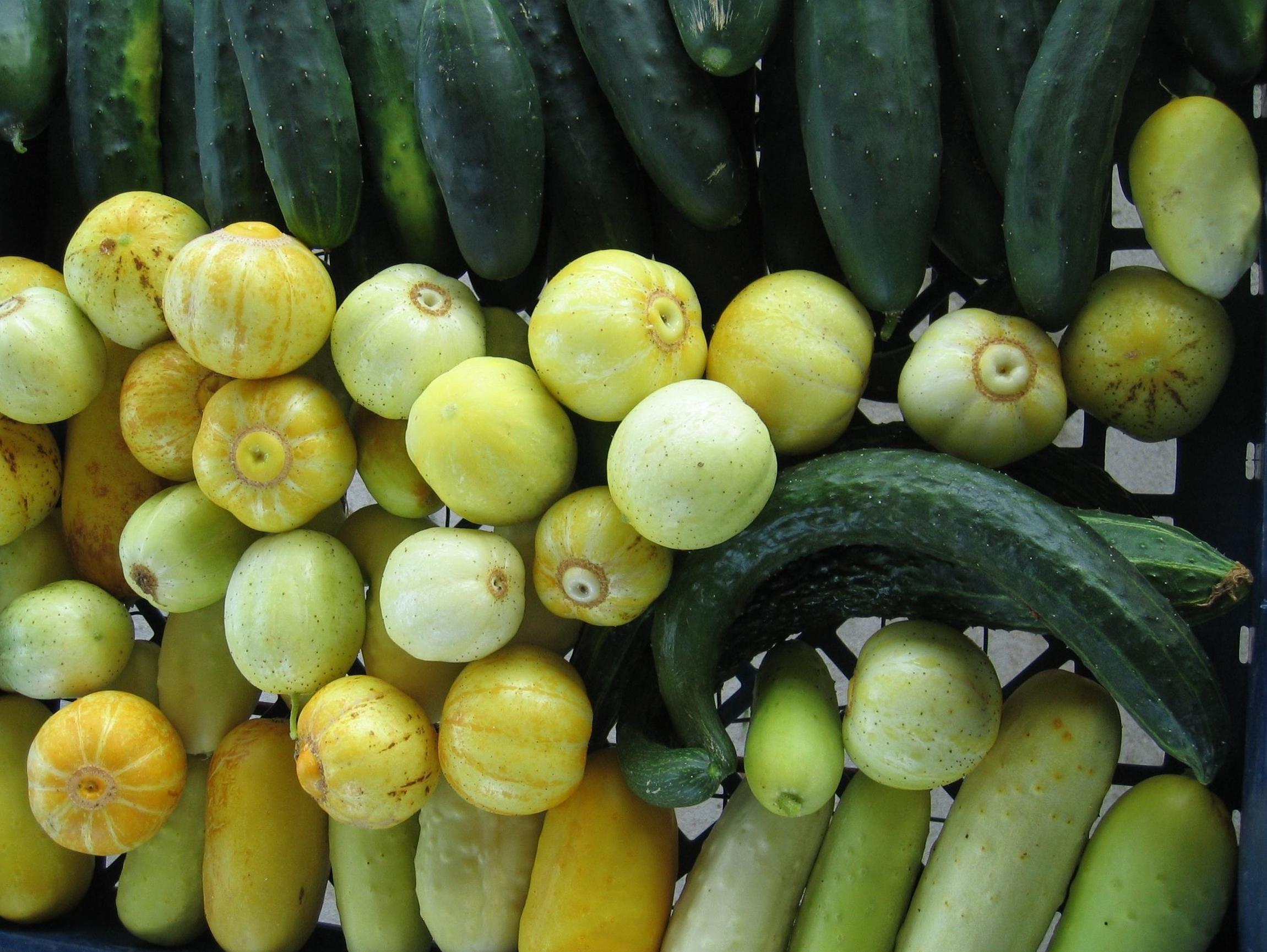 clockwise from bottom left:Edmundson, lemon cucumbers, marketmore, Sazuki madori japanese, white cucumber