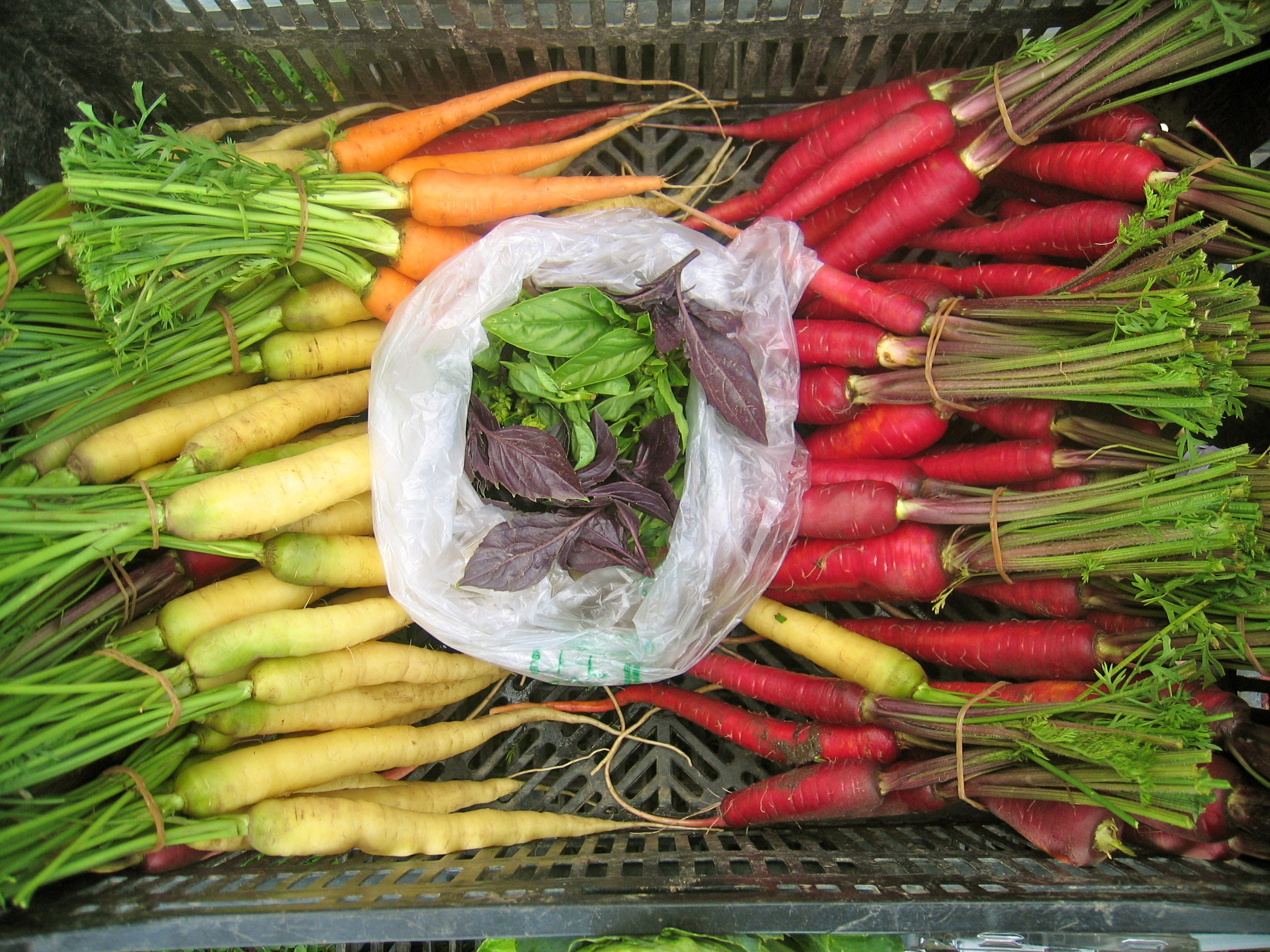 white carrots, cosmic or dragon carrots, basil leaves