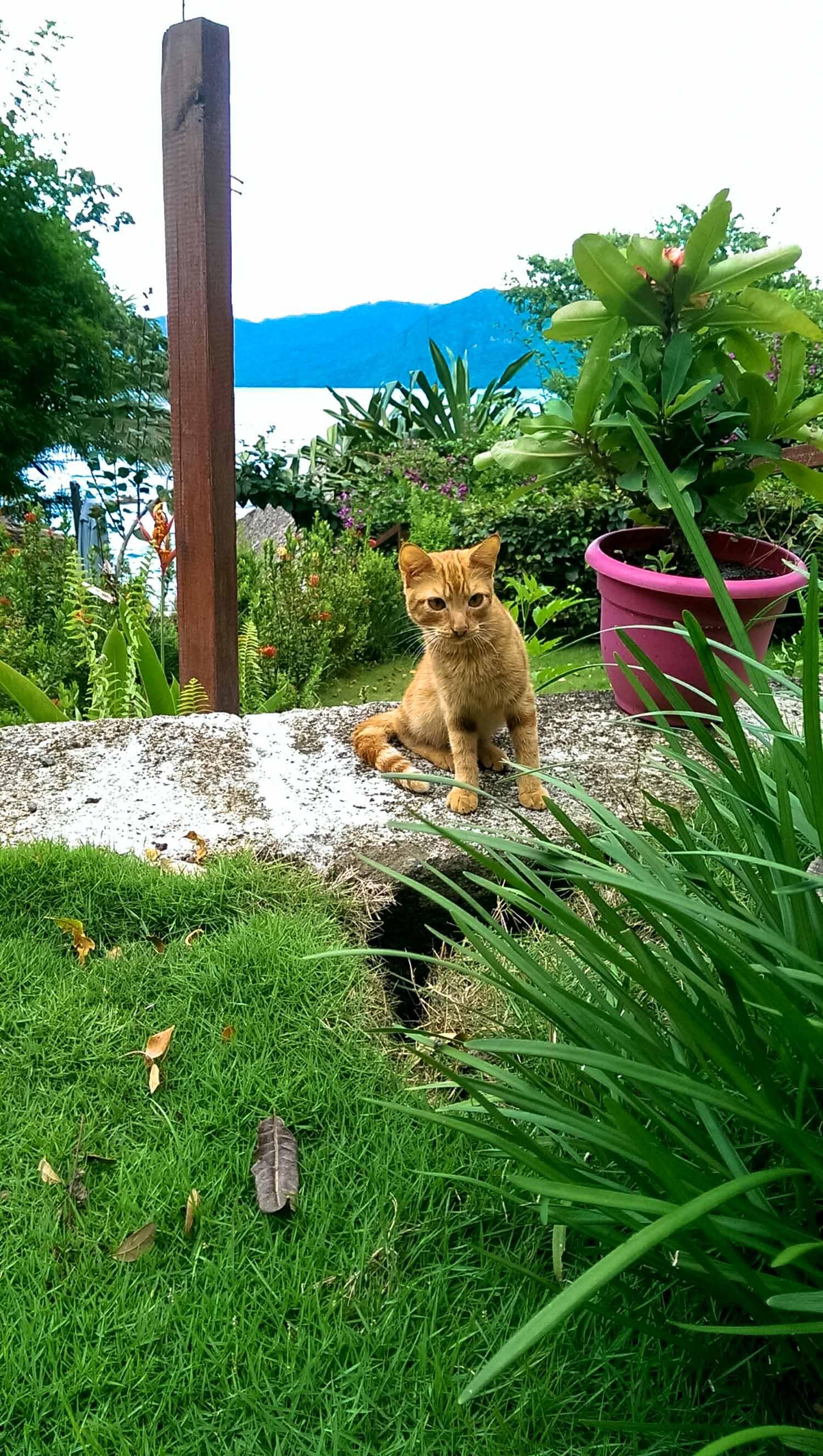 cat at paradiso hostel in laguna de apoyo