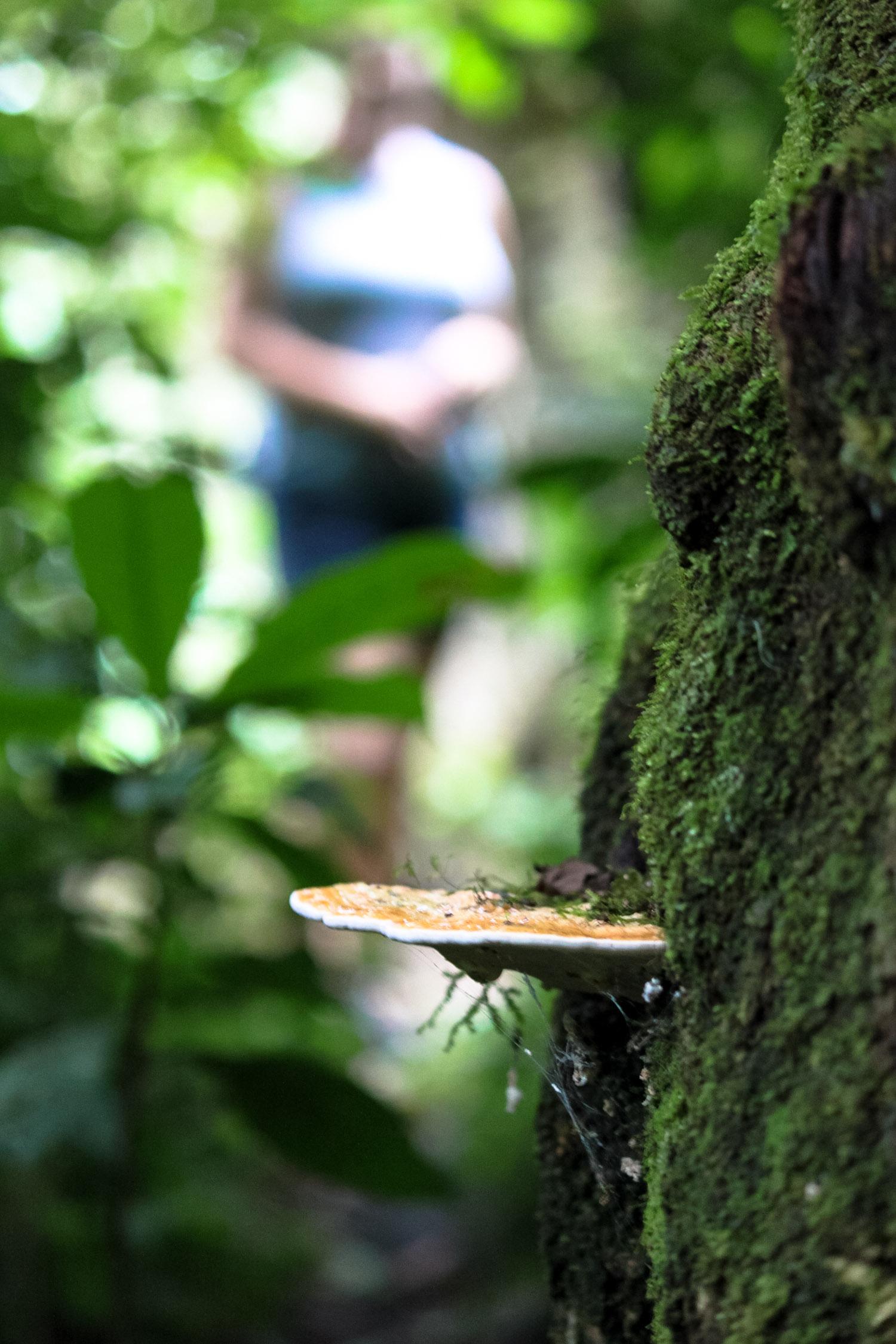 hiking in selva negra, nicaragua
