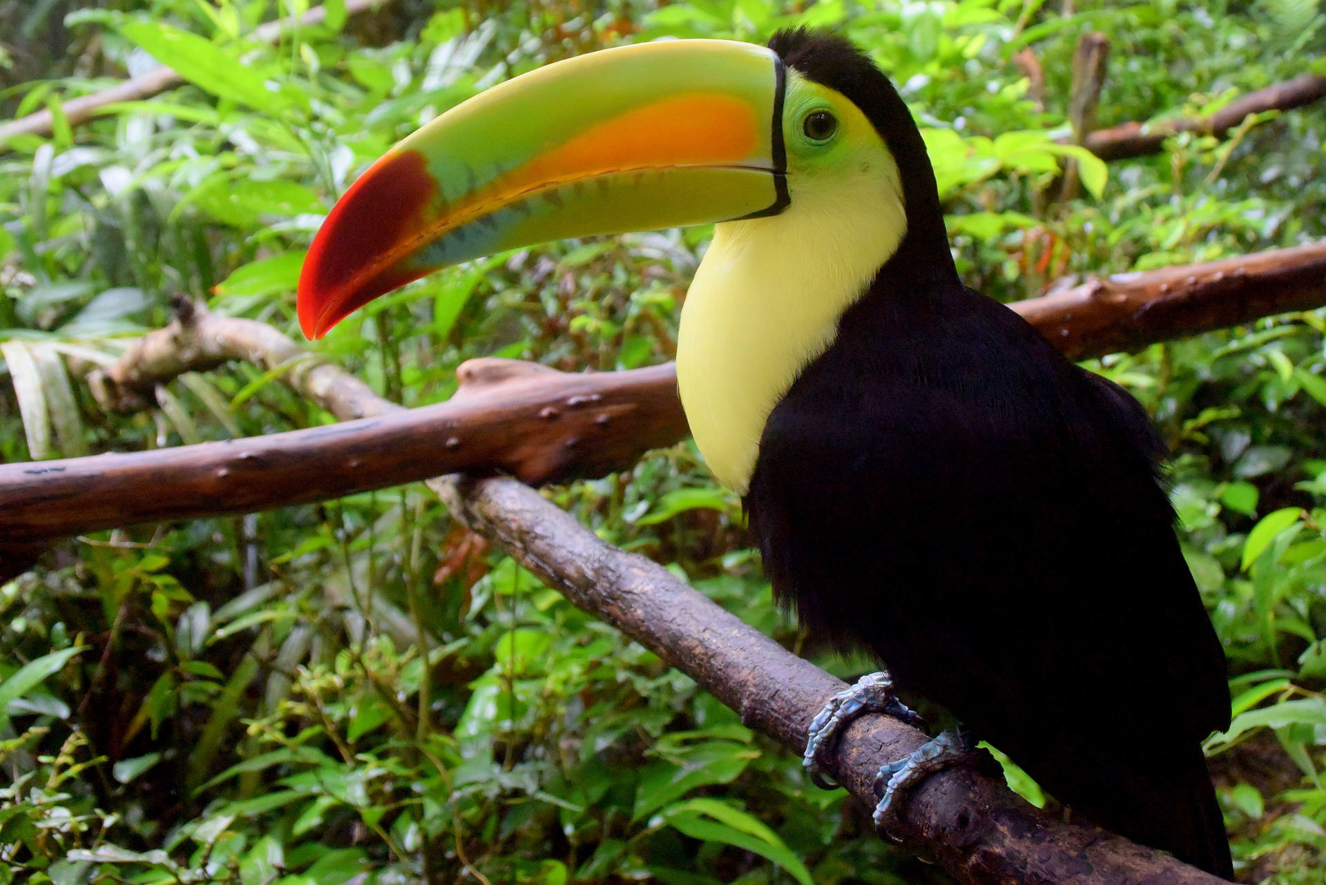 Travel to Belize - Toucan at Belize Zoo