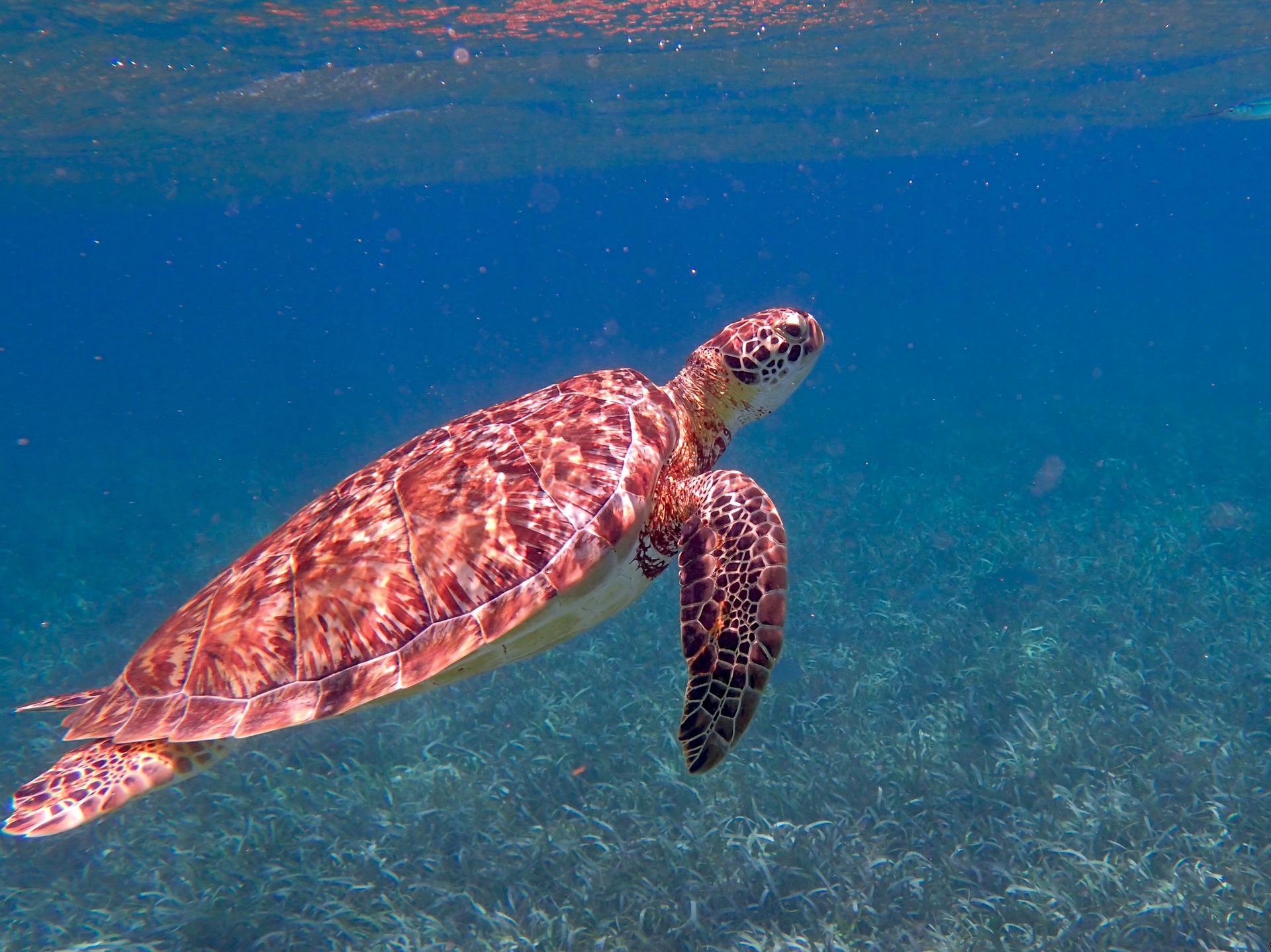 Snorkelling in Belize