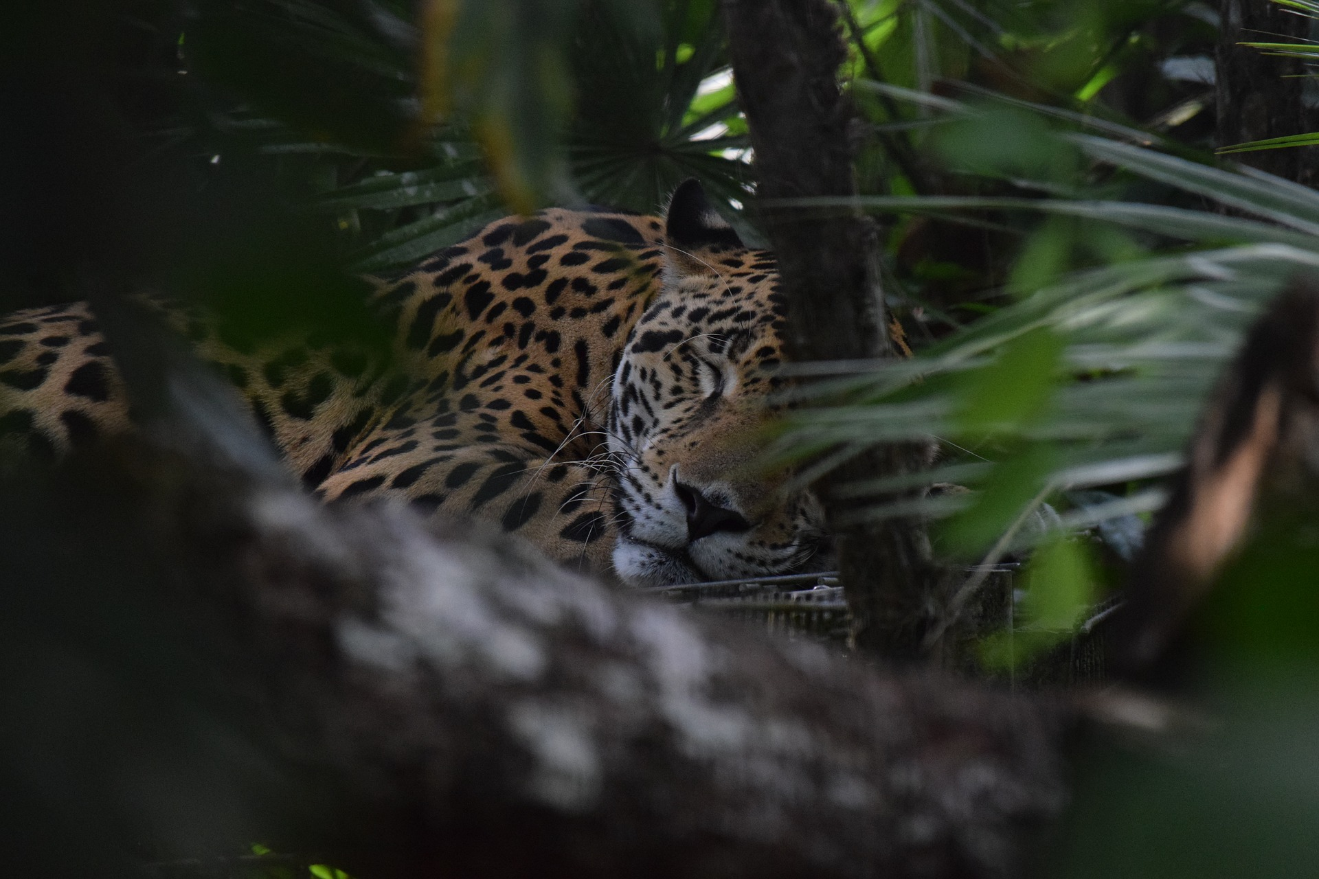 Belize Zoo - Traveling to Belize