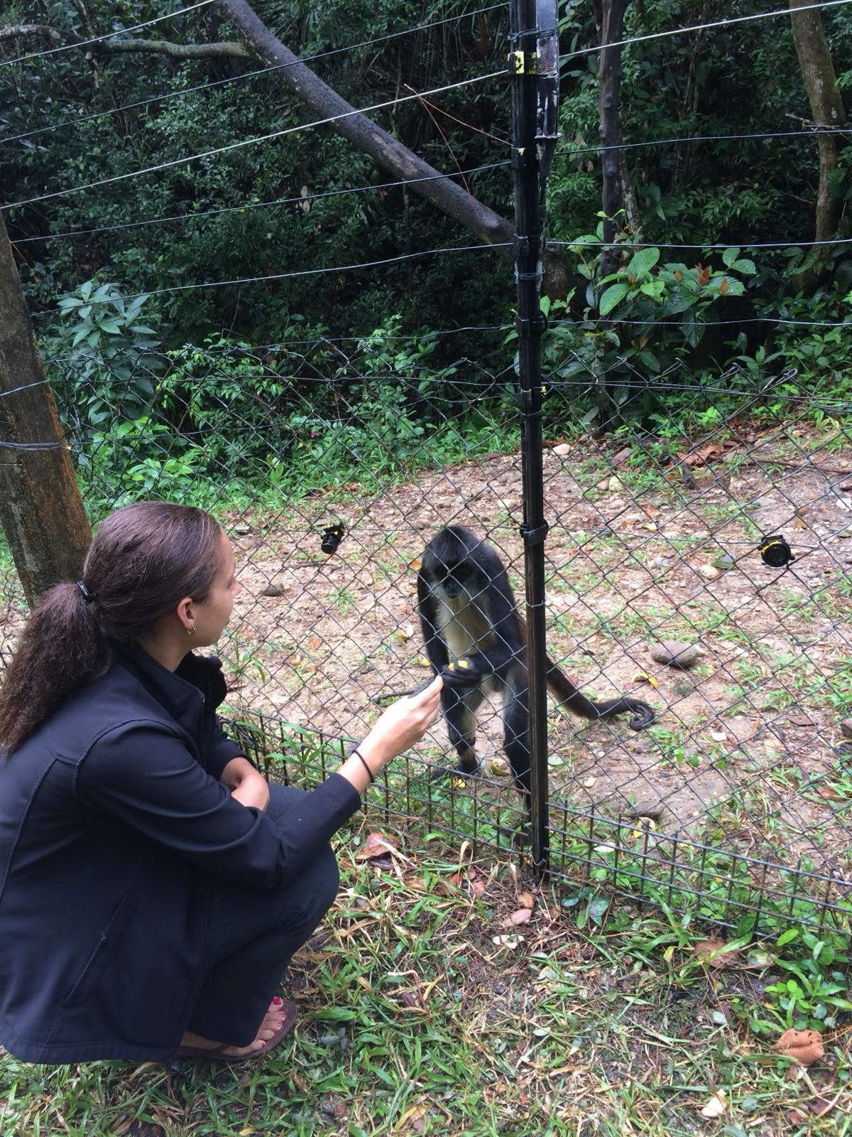 The Belize Zoo - Travel in Belize