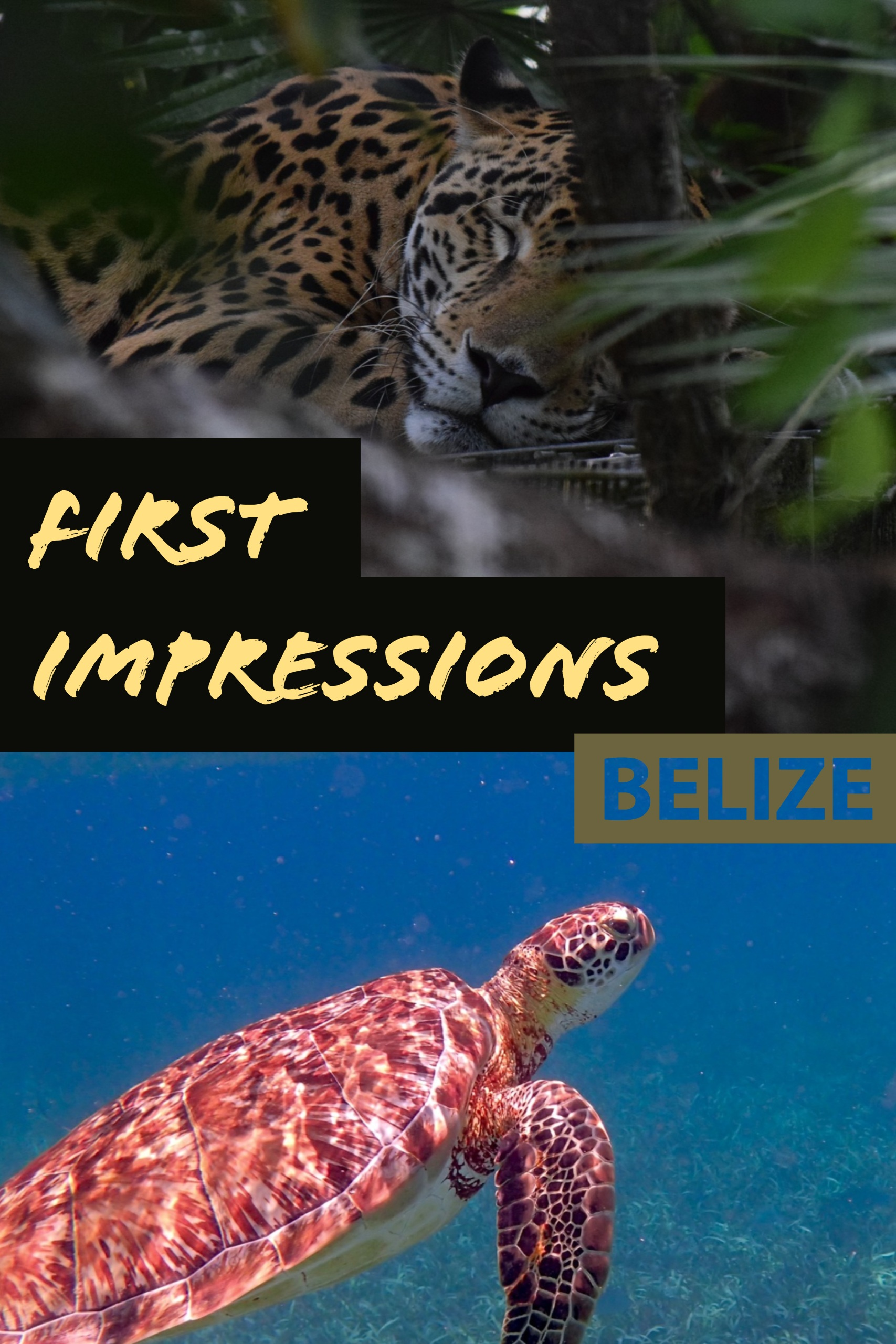 After 10 years of travel in Central America, I finally made it to Belize, my elusive last country. Here are my very first impressions after spending a few weeks there.