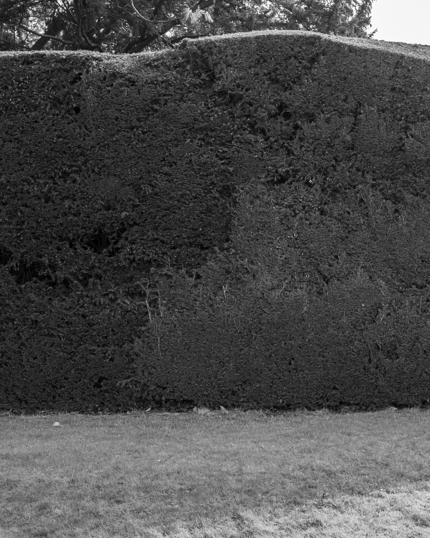 Hedge_2444.jpg