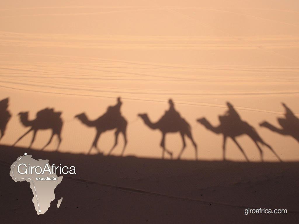 giroafrica shadow camel desert dunes