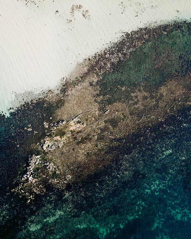 A rejenerating coastal ecosystem in the southern waters of Australia, Port Phillip Bay. Pretty neat, huh? ⁣ .⁣ .⁣ .⁣ #seeaustralia #portphillipbay #visitgeelongbellarine #visitmelbourne