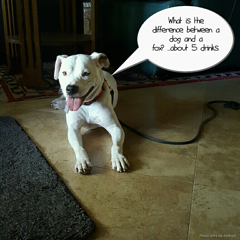 Lola presents the joke of the day.