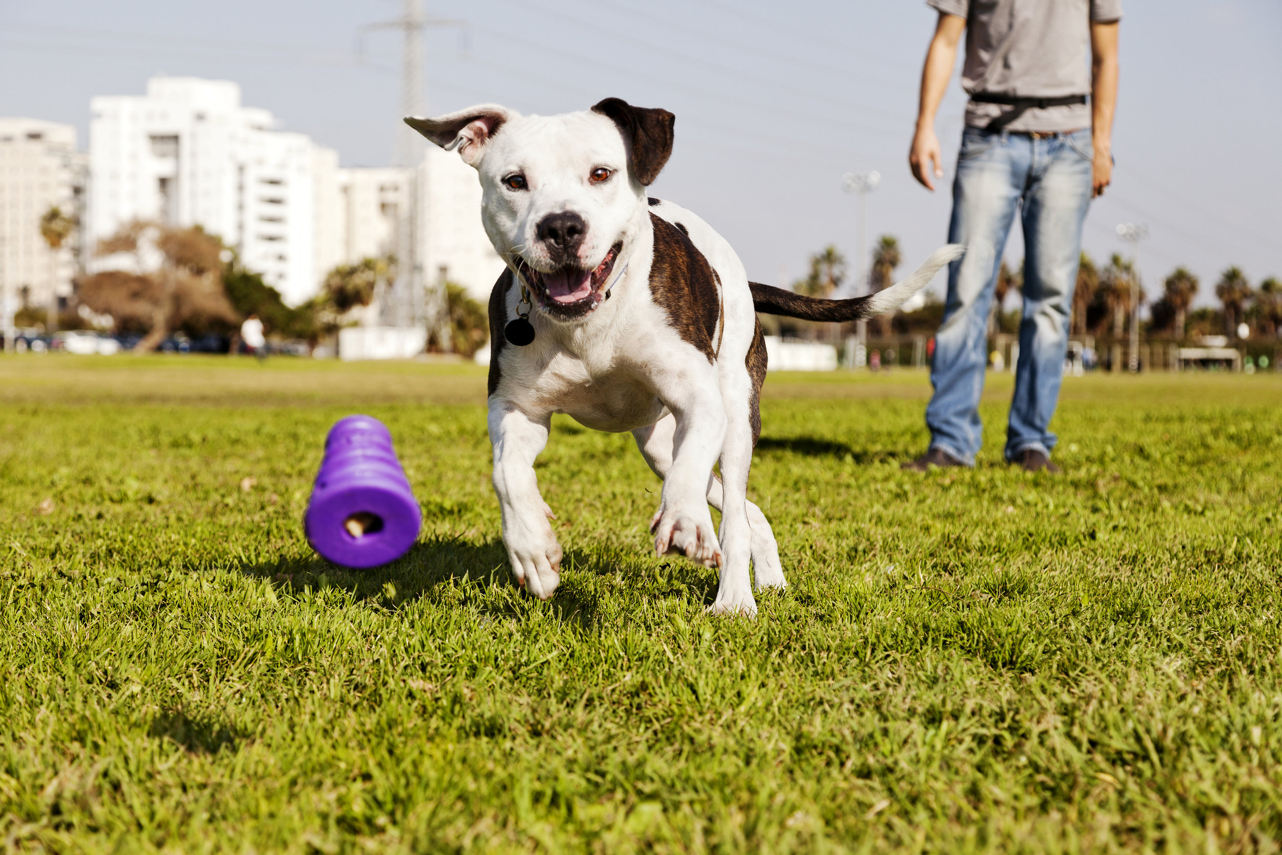Dog Trainers - In San Antonio & New Braunfels