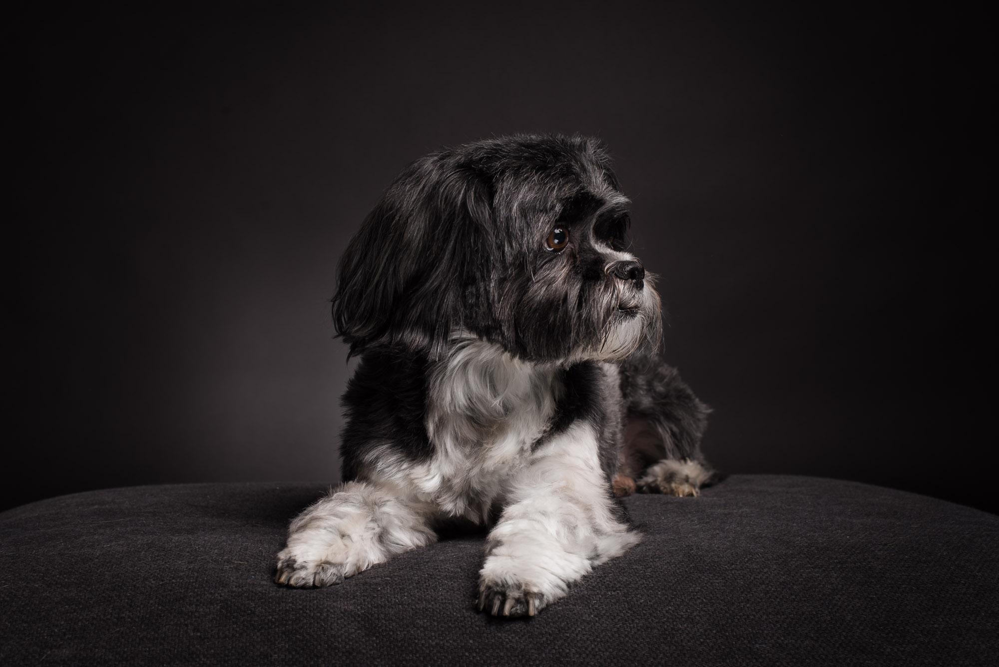 Kleiner Hund großes Herz