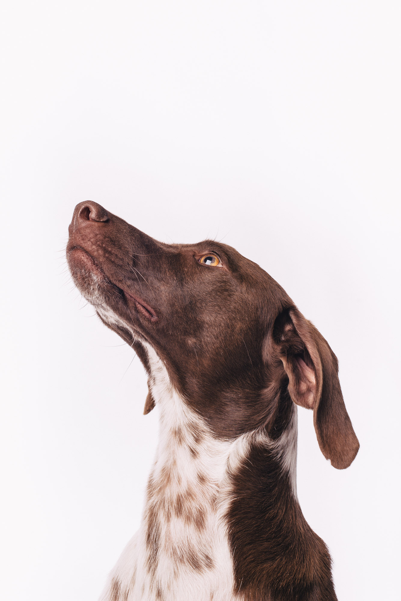 Pfotentick Hundefotografie Studio Shooting Anjo
