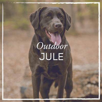 Labrador Jule Outdoor Fotoshooting
