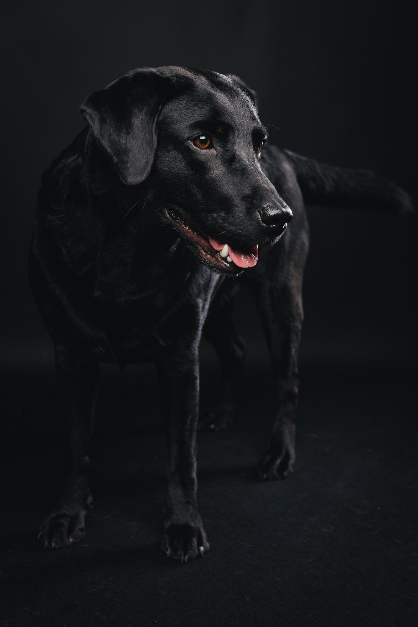 Pfotentick Hundefotografie Studio Shooting Juli